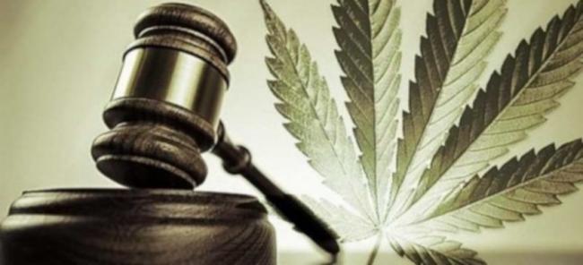 legalizar cannabis